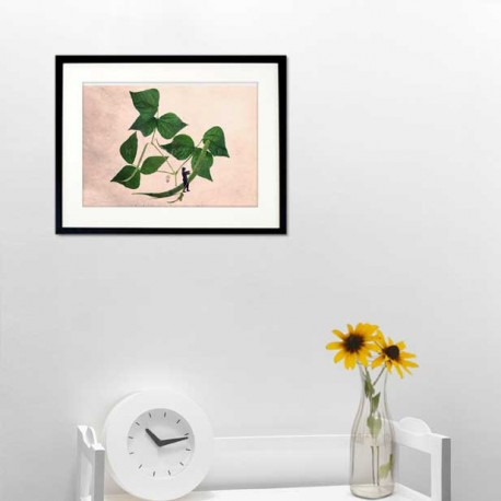 The green beans thread remover - Fine Art photography - Original Art photography - Tiny Trades series