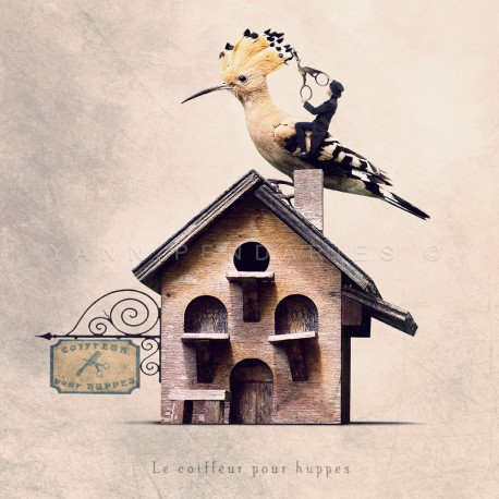 The hoopoe hairdresser - Fine Art photography - Original Art photography - Tiny Trades series