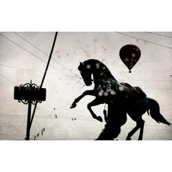 Day 40 St Petersbourg Horse - Fine Art photography - Original Art photography
