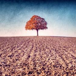 photographie artistique de paysage, My Tree, My roots Automne N°1