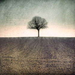 My Tree, My roots Hiver N°1, photographie artistique de paysage