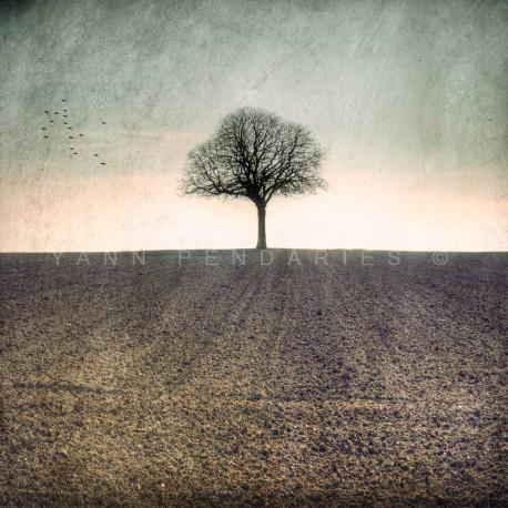 photographies arbre en hiver, My Tree, My roots Hiver N°1, photographie artistique de paysage