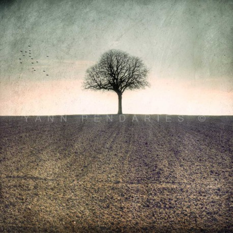 My Tree, My roots Winter N°1, Fine Art color print landscape