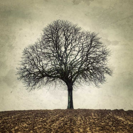 My Tree, My roots Winter N°2, Fine Art color print landscape