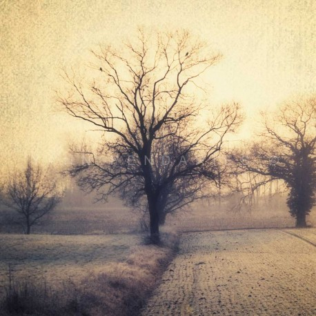 photographies originales arbre, My Tree, My roots N°1, photographie artistique de paysage