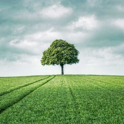 photo arbre paysage, My Tree, My roots Série printemps N°3
