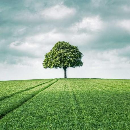 photo arbre paysage, My Tree, My roots Série printemps N°3