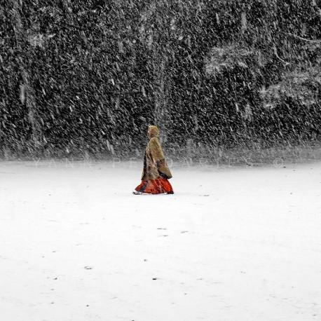 Blizzard, photographie artistique de paysage