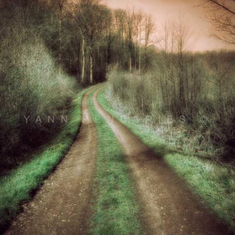 Le chemin des dames, Fine Art color print landscape
