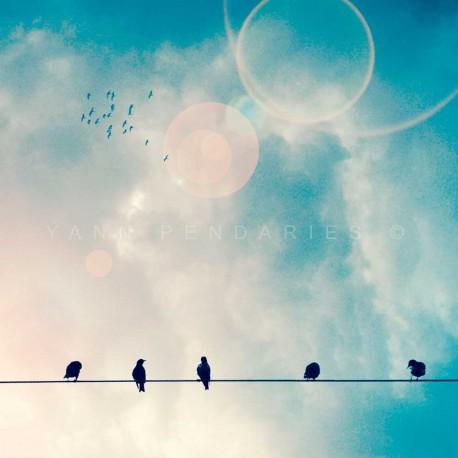 photographie oiseaux sur fil electrique, Les oiseaux N°1, photographie artistique de paysage