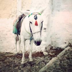 photo dâne, Le petit âne, photographie artistique de paysage urbain