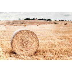 After the harvest - Fine Art photography - Original Art photography