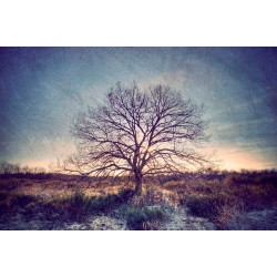 My Tree, My roots N°13, Fine Art color print landscape
