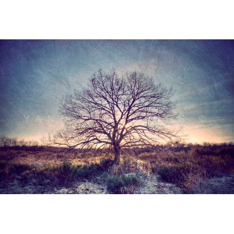 photo arbre solitaire, My Tree, My roots N°13, photographie artistique de paysage
