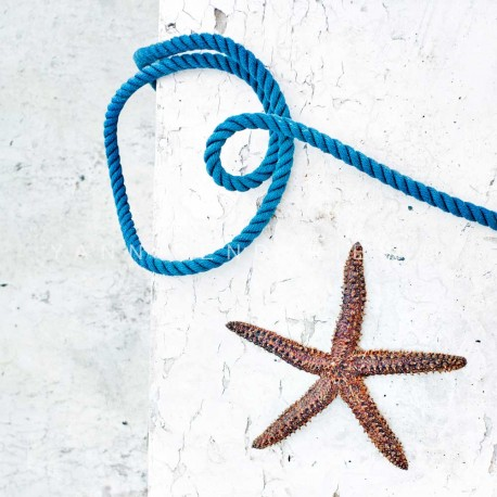 photo d'étoile de mer, Starfish, photographie artistique nature morte