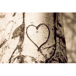 photo de coeur graver dans arbre, The tree heart, photographie artistique nature morte
