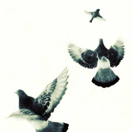 photo d'oiseaux, photographie artistique noir et blanc